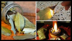 Brûler feuilles de Laurier