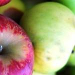 10 propriétés avérées des pommes pour la santé
